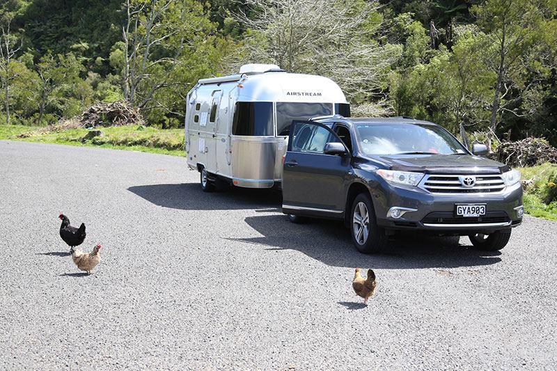 Airstream and Chickens